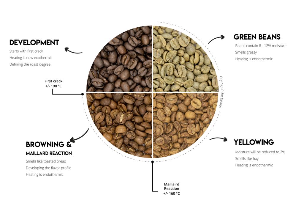 Kahve Kavurma Aşamaları: Kahve Kavurma Aşamaları
